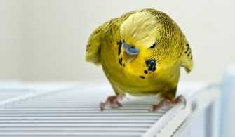 Muhabbet Kuşu Bakımı Sevdiği Sevmediği Şeyler